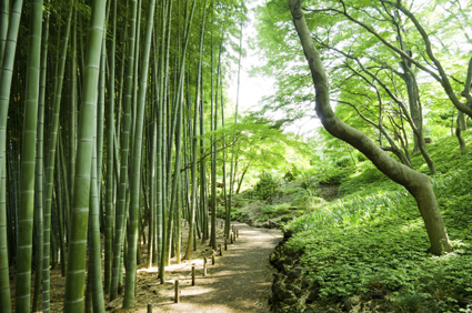Follow a playful path through the bamboo forest
